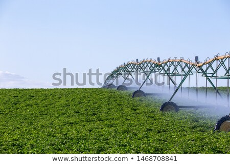 automatic irrigation of agriculture field Stock photo © Mikko