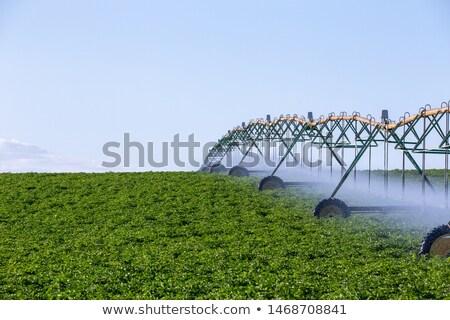 Automatico irrigazione agricoltura campo view cielo Foto d'archivio © Mikko