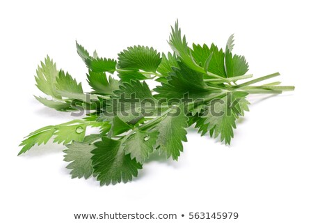 True anise (Pimpinella anisum) leaves, paths Stock photo © maxsol7