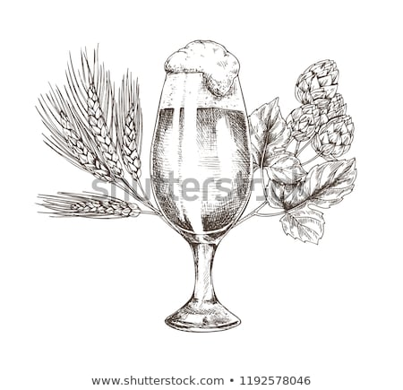 Hop Brunch and Beer Goblet Vector Illustration Stock photo © robuart