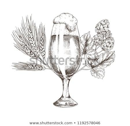 üveg · fény · világos · sör · sör · komló · növény - stock fotó © robuart