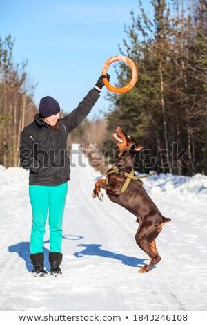 美人 ドーベルマン犬 冬季 いい 女性 犬 ストックフォト © Lopolo