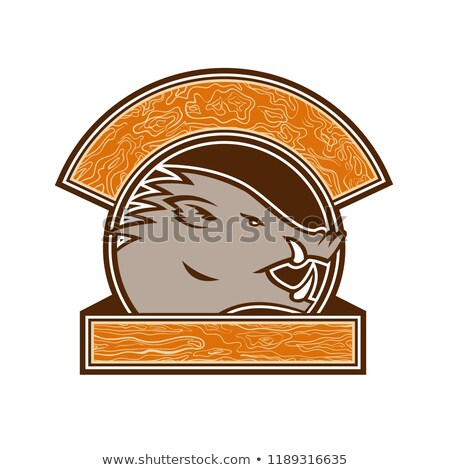Wood Boar Head Circle Retro Stock photo © patrimonio