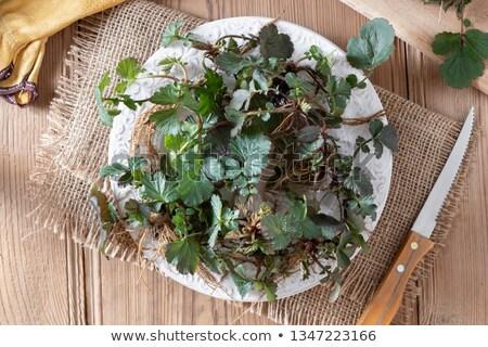 jeunes · herbe · plantes · racines · plaque · haut - photo stock © madeleine_steinbach