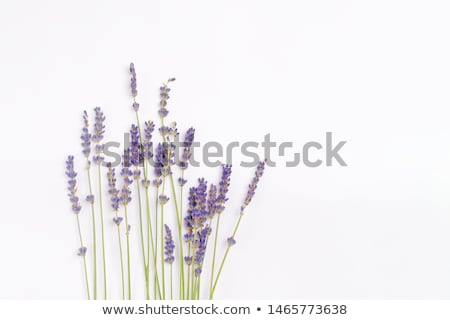 Plant composition with empty frames and natural branch on a light background. Stock photo © artjazz