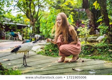 Young woman feeding an African Sacred ibis Stock photo © galitskaya