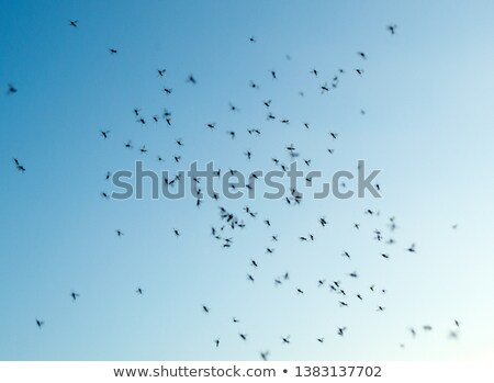 Swarm of gnats. Lots of mosquitoes and flies on blue sky background. Mosquitoes flying and swarming  Stock photo © galitskaya