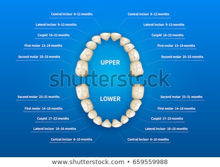Children mouth with tooth numbering chart on blue Stock photo © evgeny89