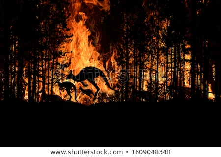 Canguru escapar projeto arte corrida correr Foto stock © bluering