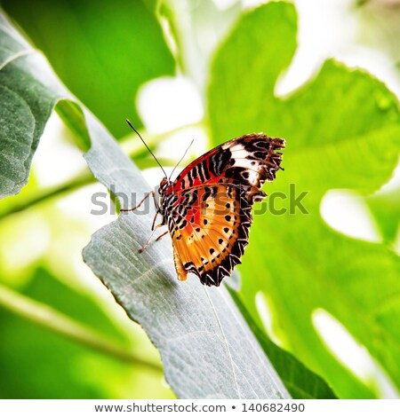 the lacewing cethosia cyane butterfly stock photo © ivanhor