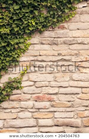 песчаник стены винограда Vintage зеленый Сток-фото © PixelsAway