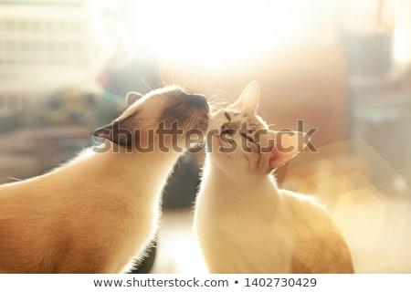 Macskák szeretet tető romantikus hold fény Stock fotó © sahua