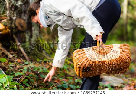 Girl picking up a flower in a park in a autumn day Stock photo © EdelPhoto