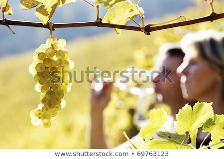 Couple checking wine in a vineyard Stock photo © photography33