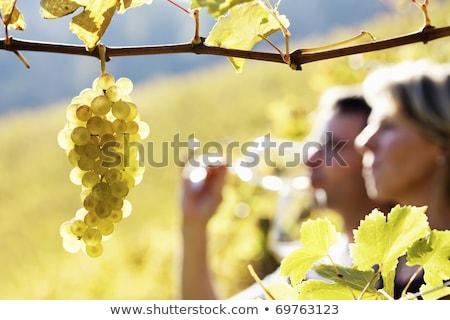 Zdjęcia stock: Couple Checking Wine In A Vineyard
