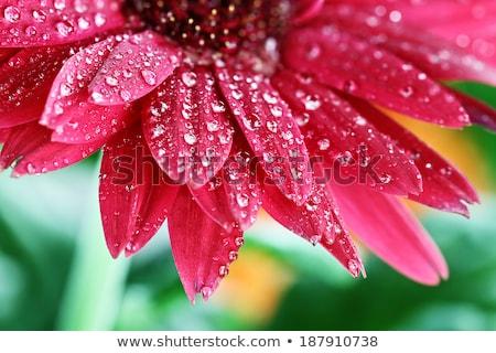 赤 ピンク 工場 雨 水滴 ぼやけた ストックフォト © mnsanthoshkumar