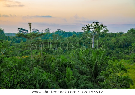 rain forest vegetation in Africa Stock photo © prill