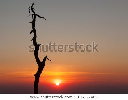Albero skyline unità Virginia contorno sunrise Foto d'archivio © backyardproductions