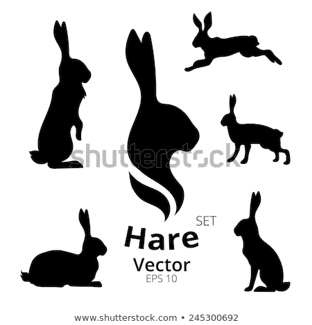 The set of the silhouettes of the hare Stock photo © perysty