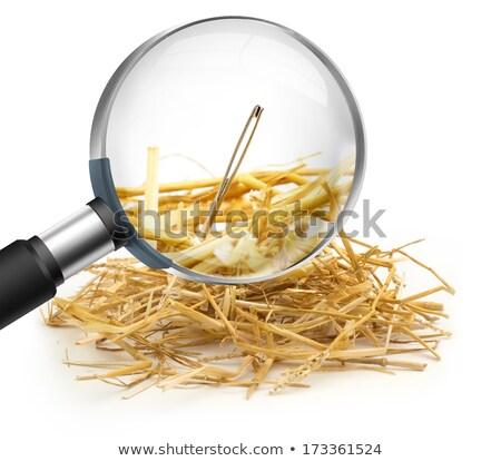 Naald hooiberg focus top hoofd Stockfoto © macropixel