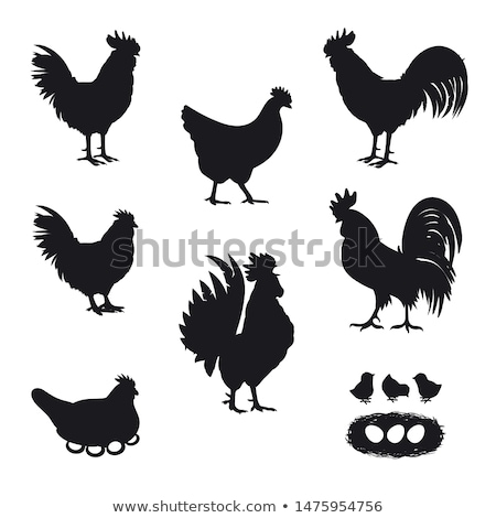 silhouette of cock Stock photo © perysty