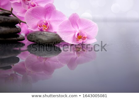 spa stones with pink flower stock photo © ronen