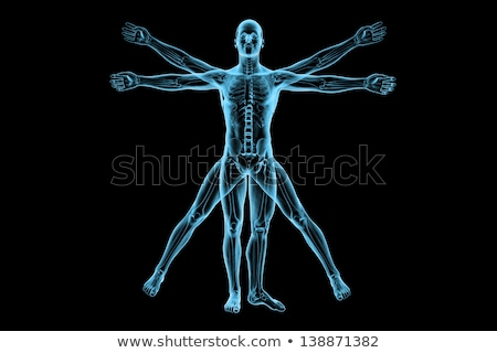 Vitruvian Human Skeleton Man Stock photo © Lightsource