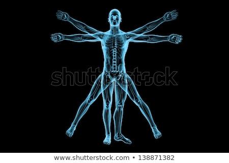 insan · iskelet · anatomi · görmek · örnek - stok fotoğraf © lightsource