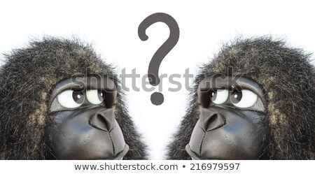 Gorillas in questioning Stock photo © mariephoto
