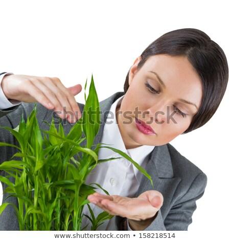 volwassen · mooie · zakenvrouw · zorg · plant - stockfoto © HASLOO