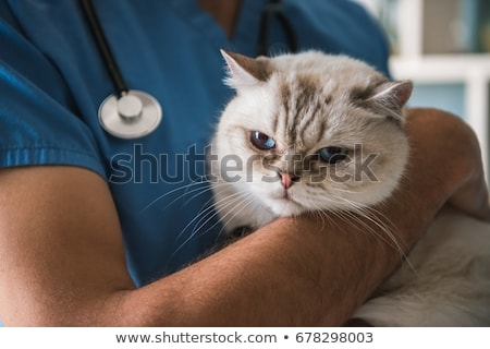 Veterinarian holding a cat at clinic Stock photo © HASLOO