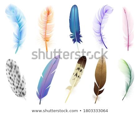 Icône plumage illustration fond blanc Photo stock © zzve