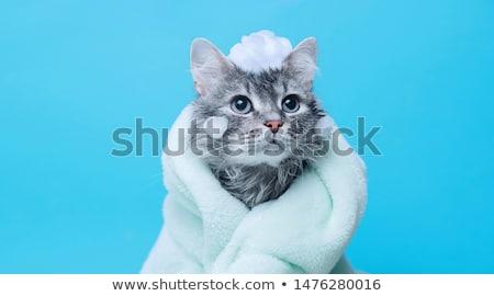 Ducha cute negro labrador a rayas toalla Foto stock © Fisher