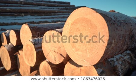 Stack of cut timber logs against clear blue sky.  Stock photo © tainasohlman