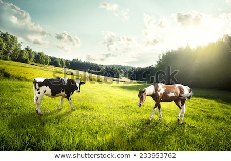 cows and horses on pasture Stock photo © goce