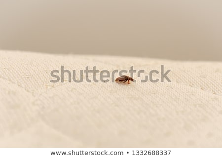 Bed Bug Stock photo © jareyonlds