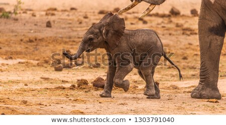 Baby Elephant Running Stock photo © fouroaks