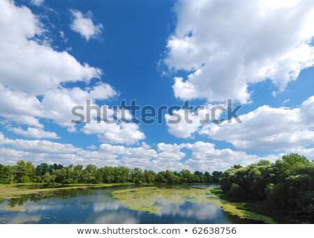 Rzeki zielona trawa mętny niebo wody trawy Zdjęcia stock © mycola
