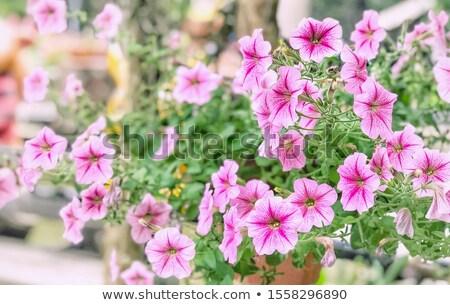 ヴィンテージ 庭園 自然 公園 葉 夏 ストックフォト © sweetcrisis