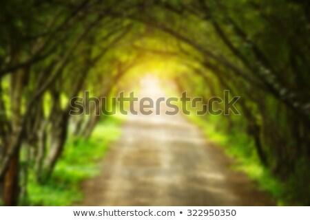 Luce del sole fine tunnel sole abstract sfondo Foto d'archivio © Leonardi
