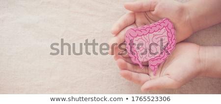 câncer · doença · digestão · tumor · diagnóstico · problema - foto stock © adrenalina