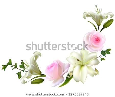 Grens rozen lelie afbeelding illustratie Stockfoto © Irisangel