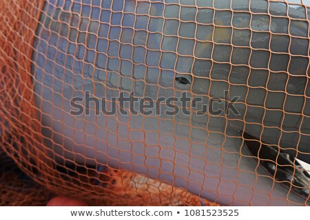 Fishing with dolphins. Stock photo © FOTOYOU