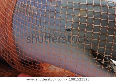 atlama · yunuslar · güneşli · deniz · manzarası · derin · okyanus - stok fotoğraf © fotoyou
