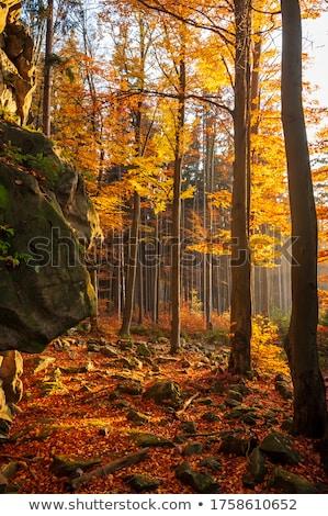 Stock fotó: ősz · díszlet · cseh · felvidék · reggel · köd
