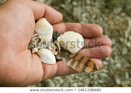 Beach Souvenirs Gathered Stock photo © AlphaBaby