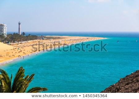Kanarie palmbomen Spanje landschap achtergrond Stockfoto © lunamarina