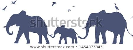 Elephants at the desert Stock photo © bluering