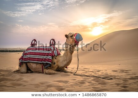 Empty Quarter Dunes stock photo © zambezi