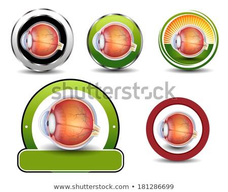 Ophthalmology symbols collection, Human eye cross section. Stock photo © Tefi